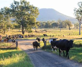 Tommerups Dairy Farmstay - Mackay Tourism