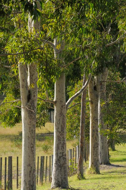 Stringybark Cottages - Mackay Tourism