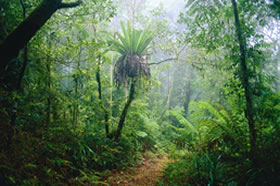 Lamington National Park and OReillys - Mackay Tourism