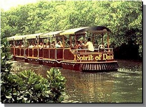 Daintree Rainforest River Trains - Mackay Tourism