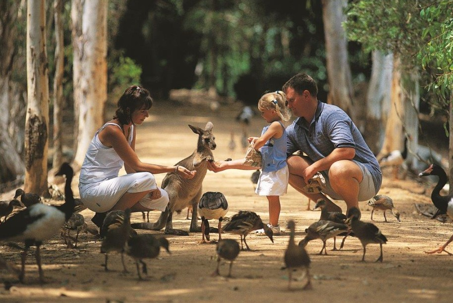 Billabong Sanctuary - Mackay Tourism