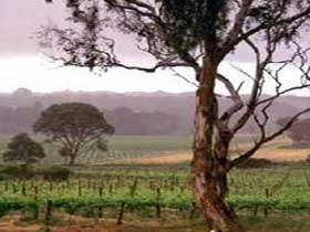 Yangarra Estate Vineyard - Mackay Tourism
