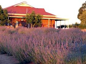 Bella Lavender Estate - Mackay Tourism