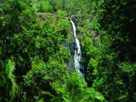 Kondalilla National Park - Mackay Tourism
