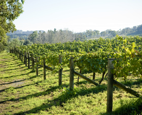 Surveyor's Hill Vineyards - Mackay Tourism