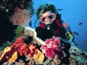 Nine Mile Reef Dive Site - Mackay Tourism