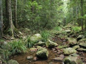 Amamoor State Forest - Mackay Tourism