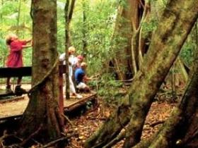 Mary Cairncross Scenic Reserve - Mackay Tourism
