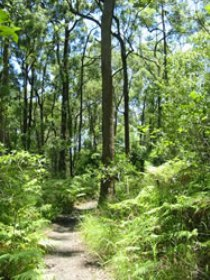 Mapleton Falls National Park - Mackay Tourism