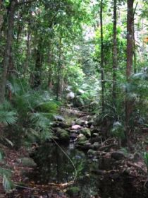 Mossman Gorge Rainforest Circuit Track Daintree National Park - Mackay Tourism