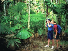 Mount Sorrow Ridge Trail Daintree National Park - Mackay Tourism