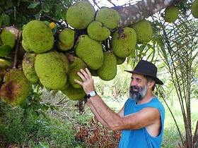 Cape Trib Exotic Fruit Farm - Mackay Tourism