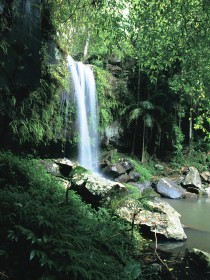 Curtis Falls Joalah Section - Mackay Tourism