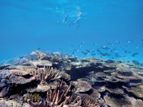 Australian Institute of Marine Science - Mackay Tourism