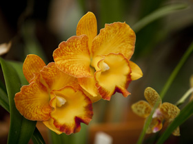Queens Park - Orchid House - Mackay Tourism
