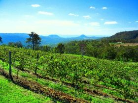 Preston Peak Wines - Mackay Tourism