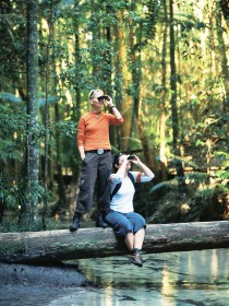 Birdwatching on the Fraser Coast - Mackay Tourism