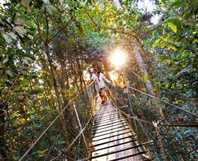 Tree Top Walkway - Mackay Tourism