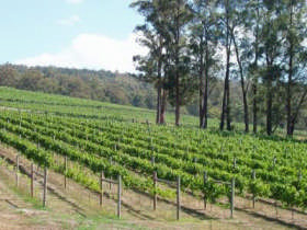Piedmont Vineyard - Mackay Tourism