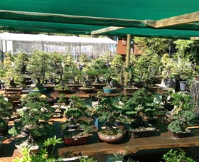 Bonsai at the Bay - Mackay Tourism