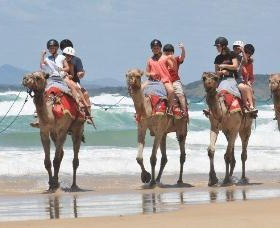 Camel Rides with Coffs Coast Camels - Mackay Tourism