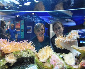 Solitary Islands Aquarium - Mackay Tourism