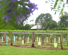 Douglas Vale Historic Homestead  Vineyard - Mackay Tourism
