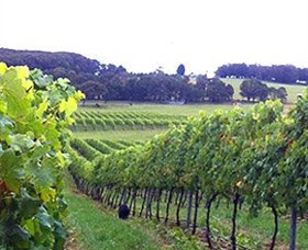 Banjo's Run Winery and Vineyard - Mackay Tourism