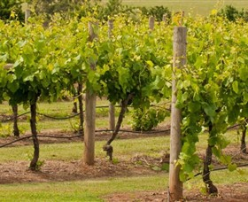 Mt Coghill Vineyard - Mackay Tourism