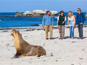 Seal Bay Conservation Park - Mackay Tourism