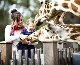 Taronga Western Plains Zoo Dubbo - Mackay Tourism