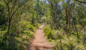 Mares Forest Creek walking track - Mackay Tourism