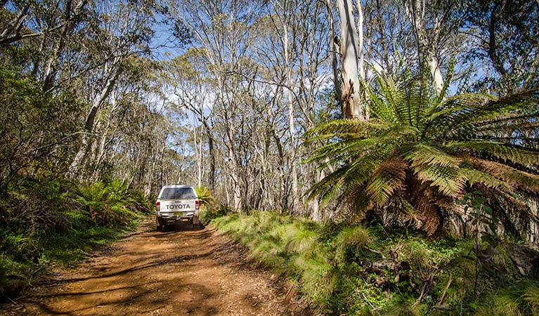 Barrington trail - Mackay Tourism