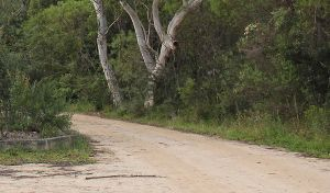 Riverview walking track - Mackay Tourism