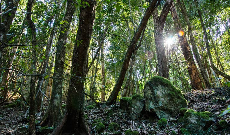Copeland Tops State Conservation Area - Mackay Tourism