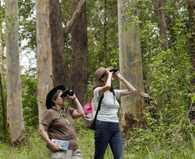 Chichester State Forest - Mackay Tourism