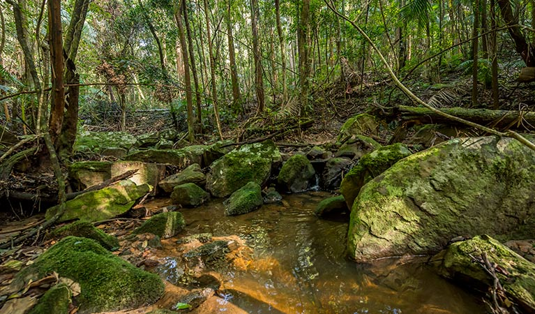 Palm Grove Nature Reserve - Mackay Tourism