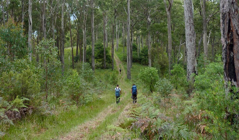The Green Gully track - Mackay Tourism