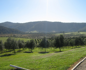 Hastings Valley Olives - Mackay Tourism
