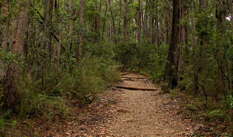 Pigeon House Mountain Didthul walking track - Mackay Tourism