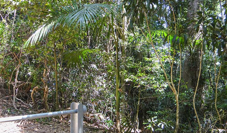 Goorgana walking track - Mackay Tourism