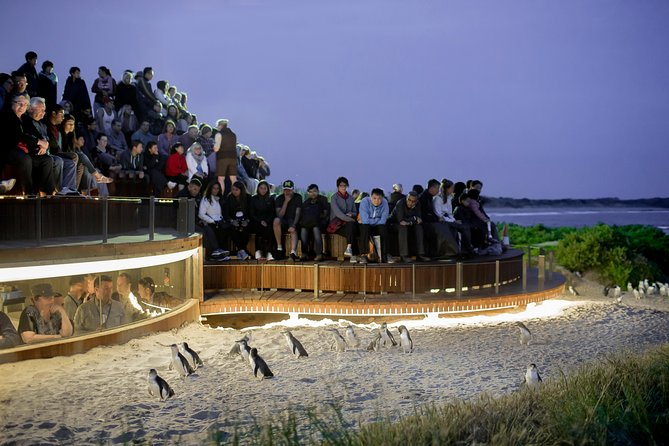 1 Day Private Phillip Island Tour VIP Charter up to 9 People - Mackay Tourism