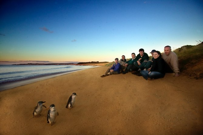 Phillip Island Ultimate Penguin Eco Tour or Skybox Experience - Mackay Tourism