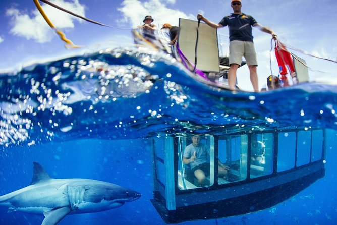 White Shark Tour with Optional Cage Dive from Port Lincoln - Mackay Tourism