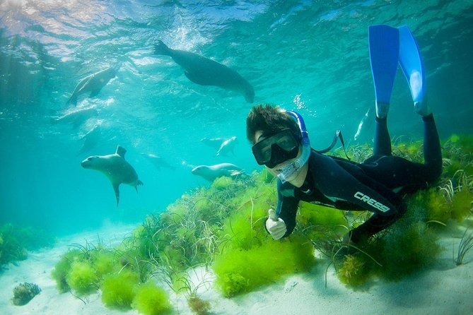 Half-Day Sea Lion Snorkeling Tour from Port Lincoln - Mackay Tourism