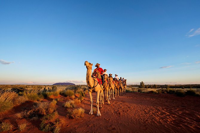 Uluru Camel Express Sunrise or Sunset Tours - Mackay Tourism