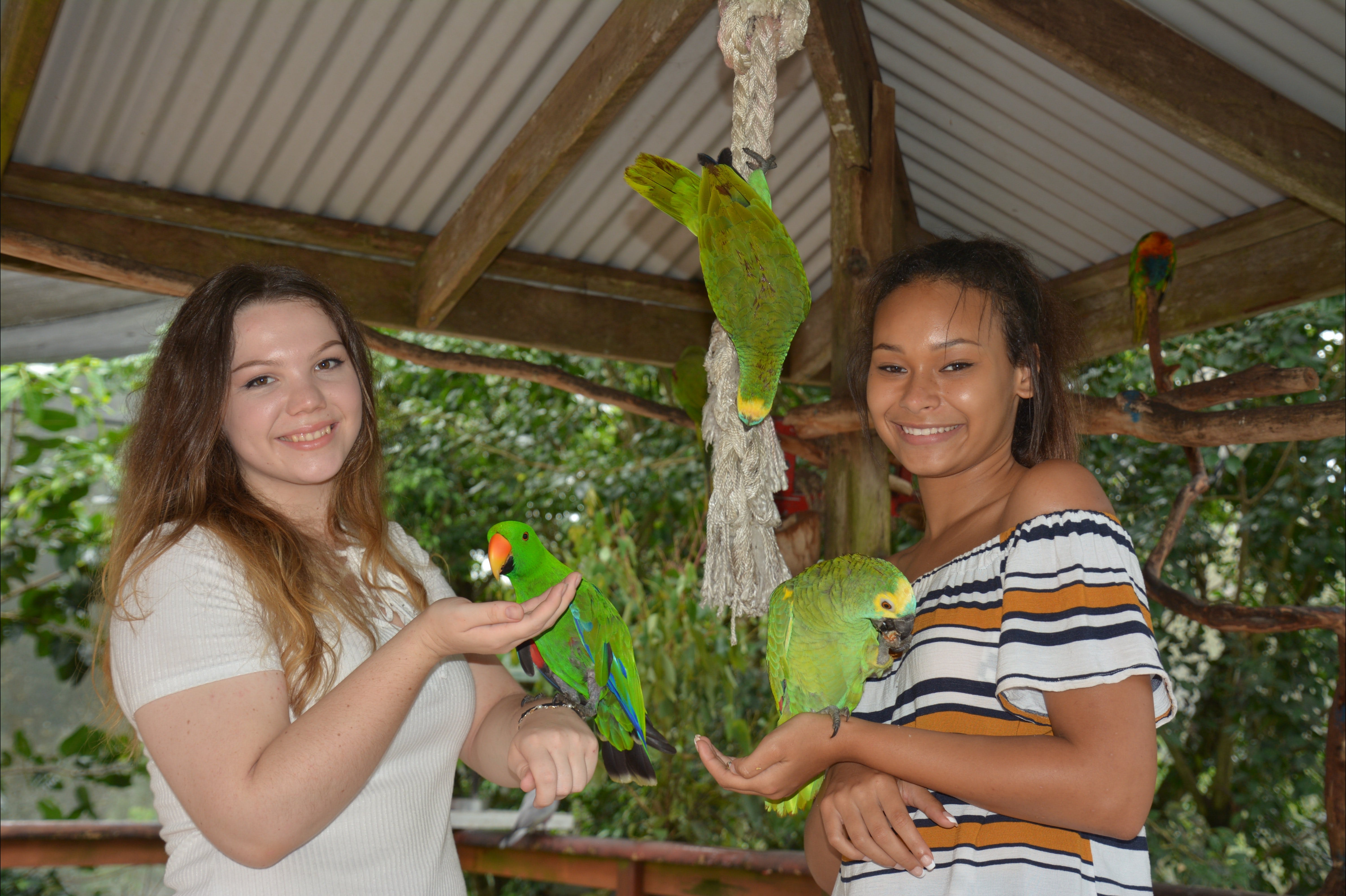 Birdworld Kuranda - Mackay Tourism