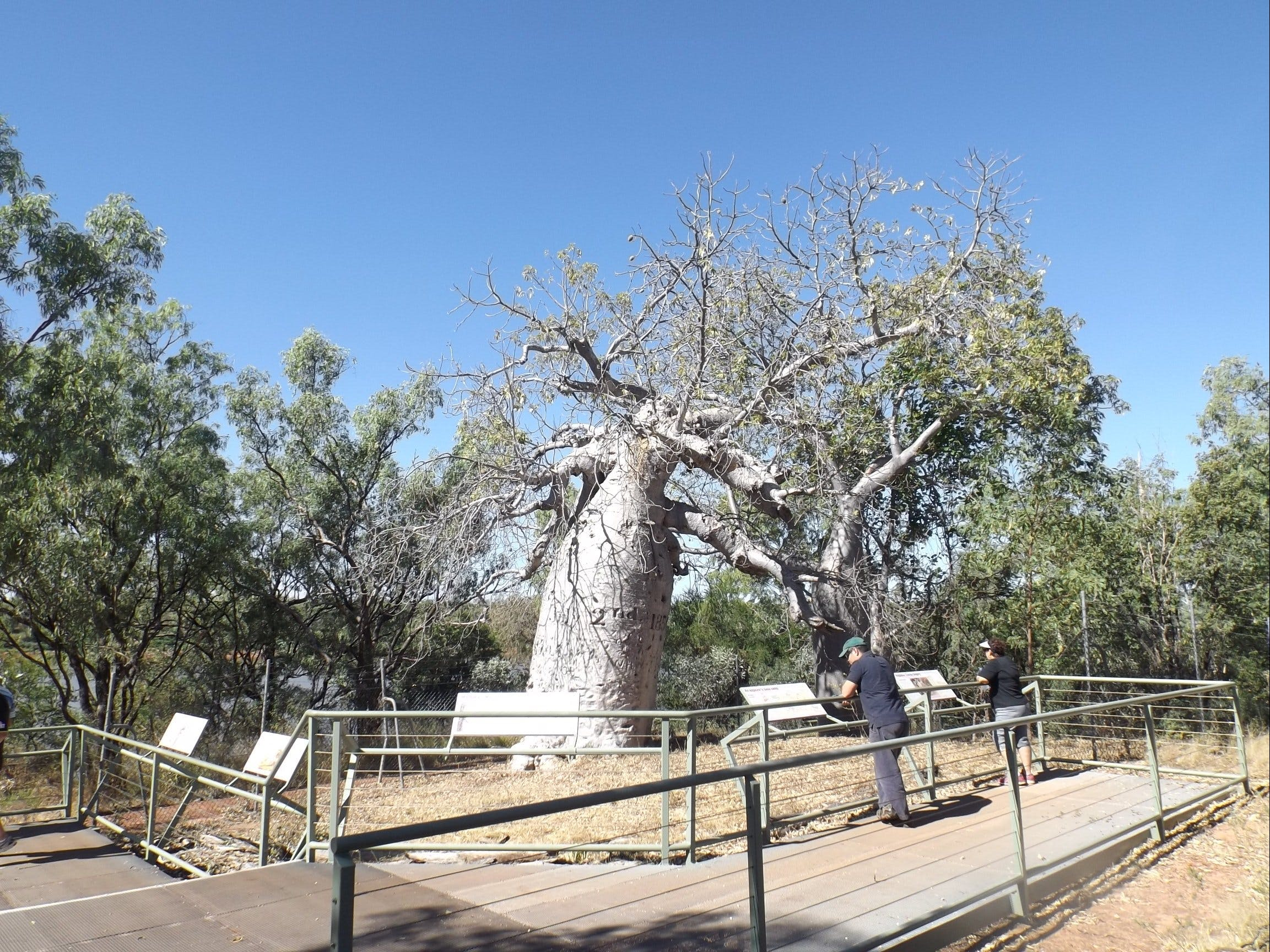 Gregory's Tree Timber Creek - Mackay Tourism