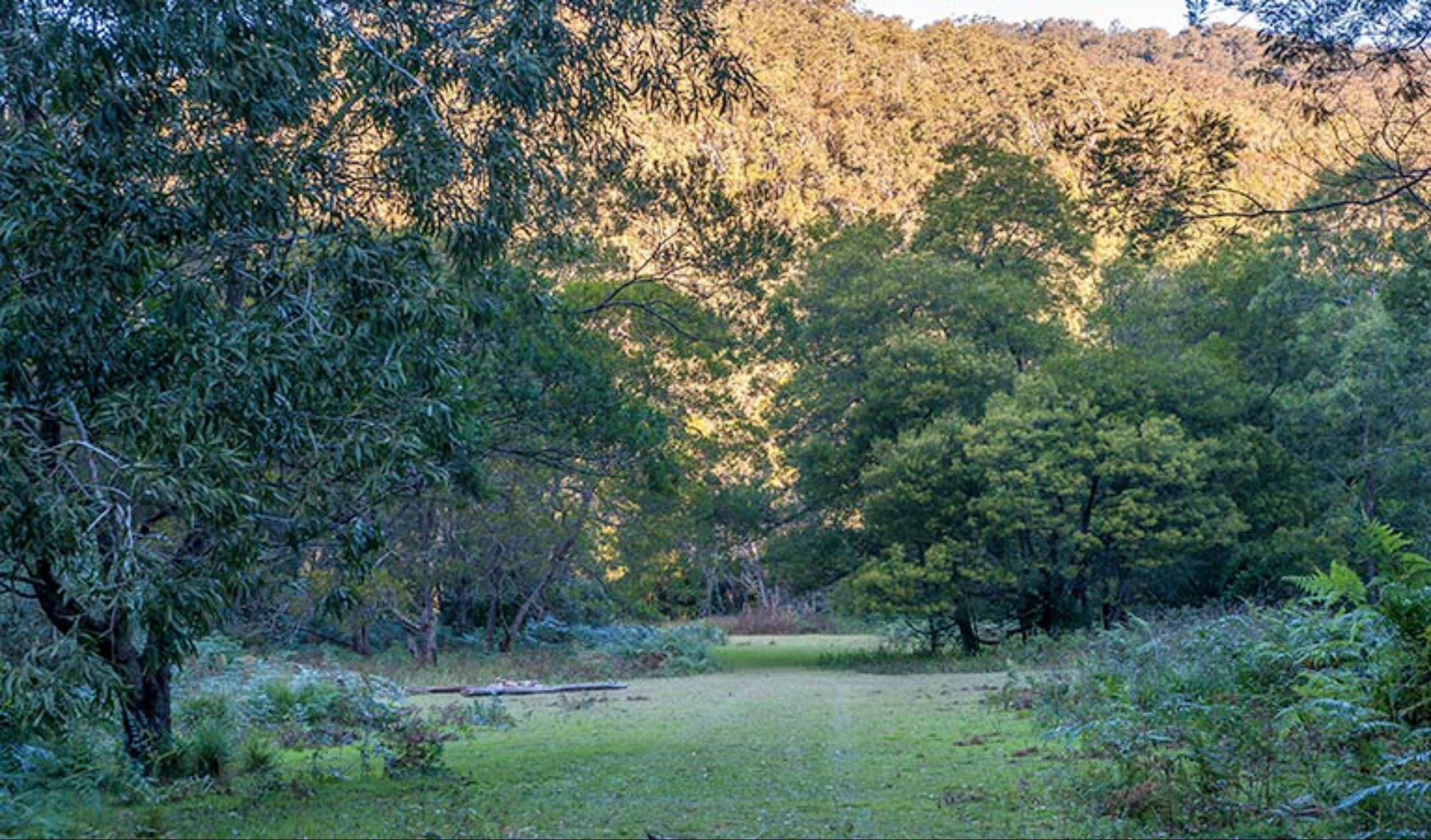 Griffins walking track - Mackay Tourism