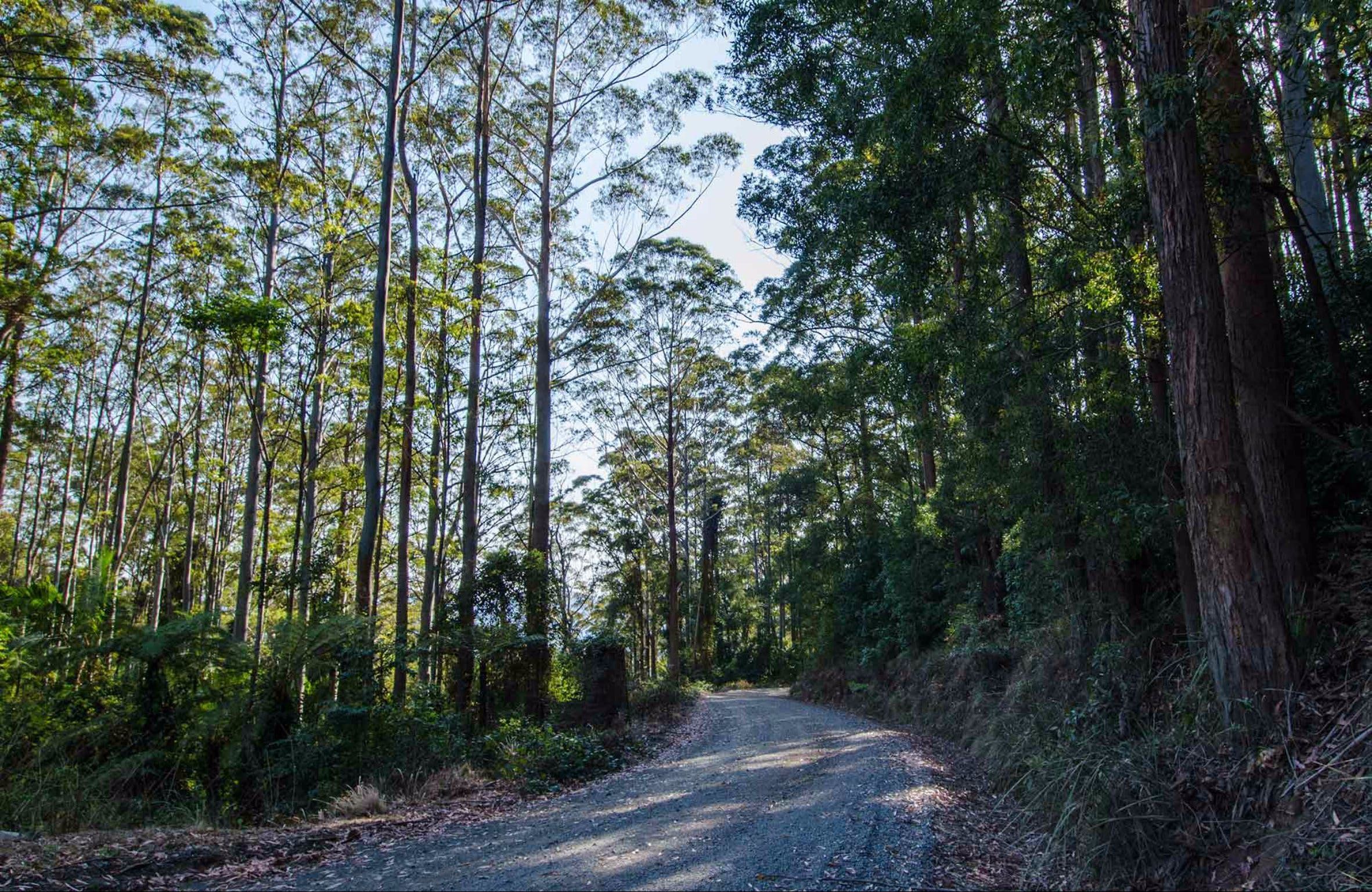 Hastings Forest Way Touring Route - Mackay Tourism
